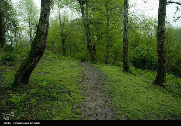 Nature of Northern Iran 5