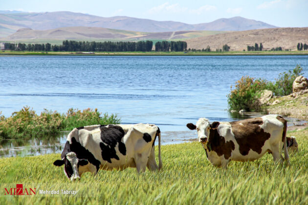 Iran's Nature in Photos Dargah Sangi International Wetland 8