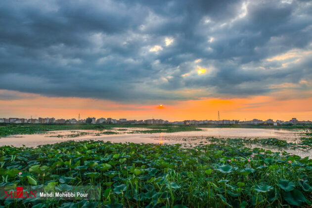 Lotus Lagoon of Mazandaran 18