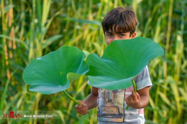 Nature of Northern Iran 11