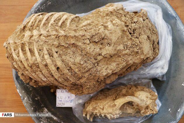 Iranian Archaeology 5