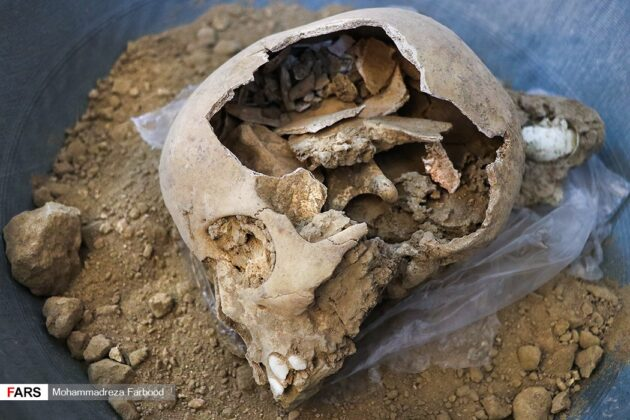 Remains of Humans, Animals Found in Persepolis Ruins 8