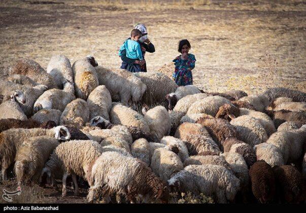 Lak Tribe Start Seasonal Migration in Western Iran 29