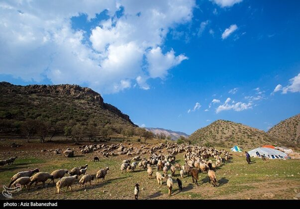 Lak Tribe Start Seasonal Migration in Western Iran 29