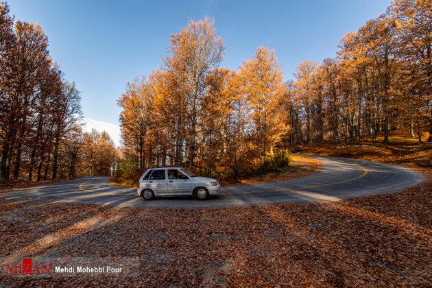 Autumn in Mazandaran 1