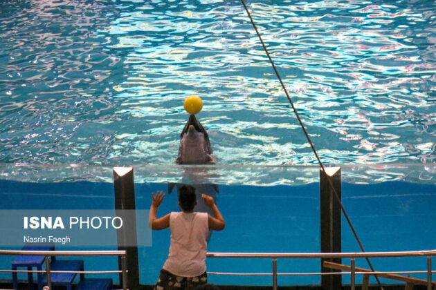 The Dolfinarium also known as the Dolphins' Park is one of visitor attractions on Kish Island