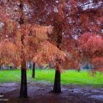 Autumn in Gilan
