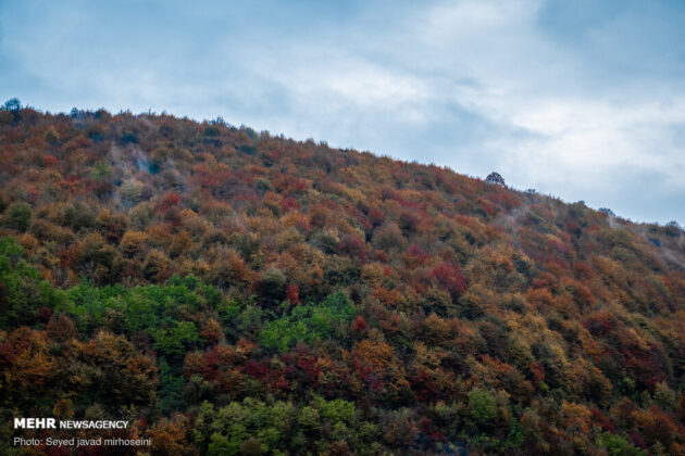 Autumn in Gilan